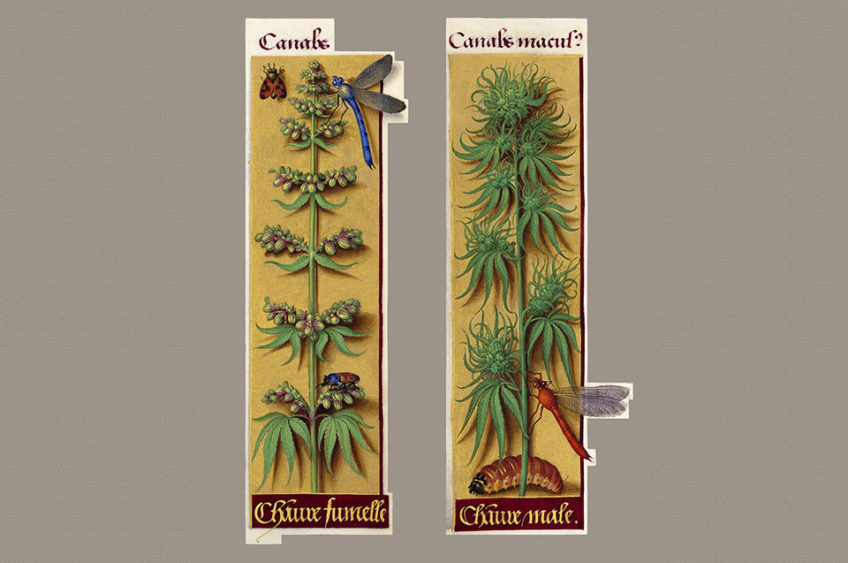 Cannabis book of hours