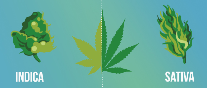 indica and sativa height differences