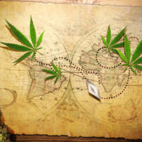 History of Marijuana: An All-Encompassing Journey Through The Ages