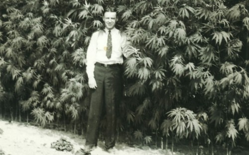 Vintage cannabis grower