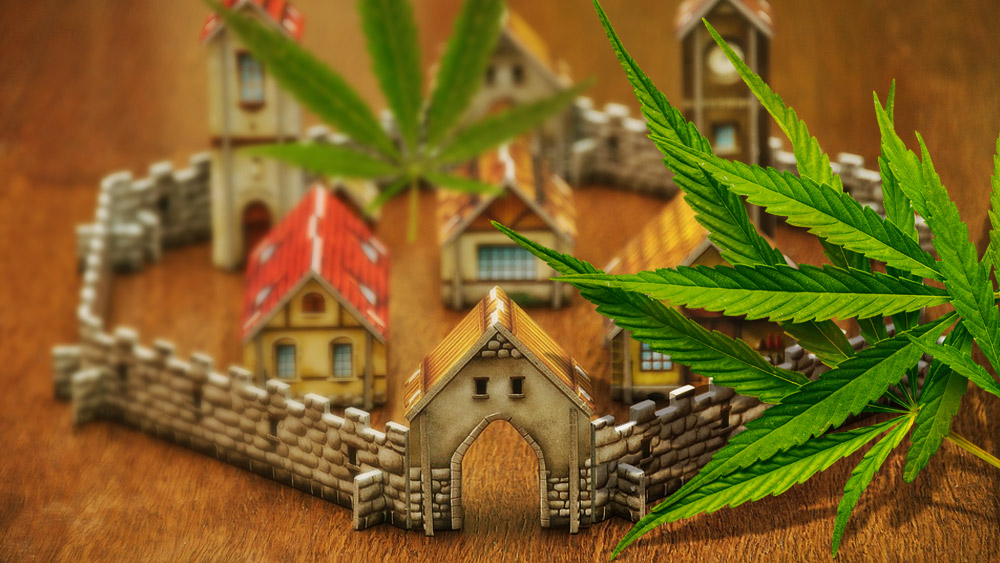 weed city