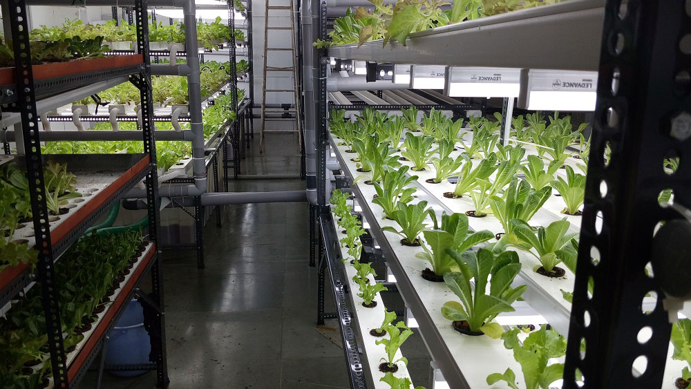 Vertical Hydroponics: NFT Systems and