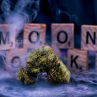 What Are Cannabis Moon Rocks & How to Make Them in 3 Steps (Update)