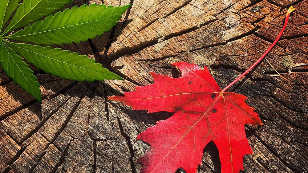 marijuana legalization canada