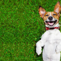 CBD Oil for Dogs: 9 Health Benefits (Dosage Guide Included)