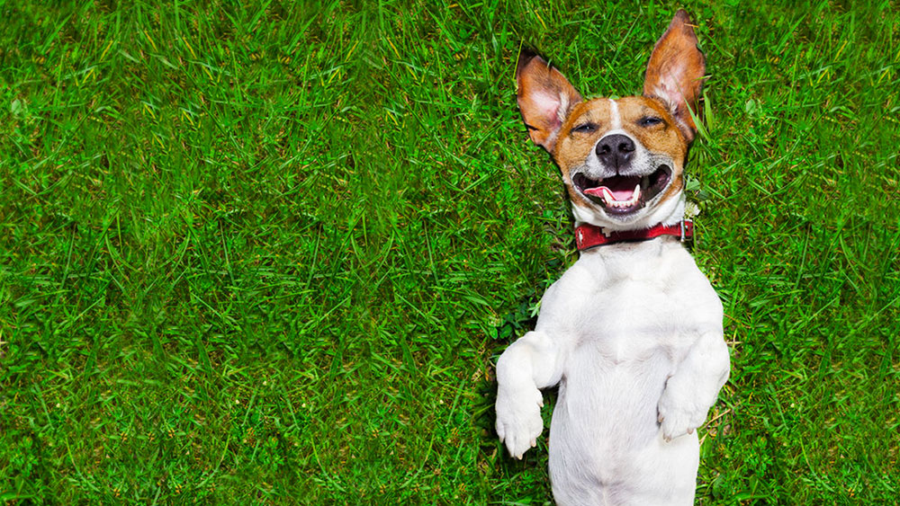 CBD Oil for Dogs: Practical Guide for Dog Parents