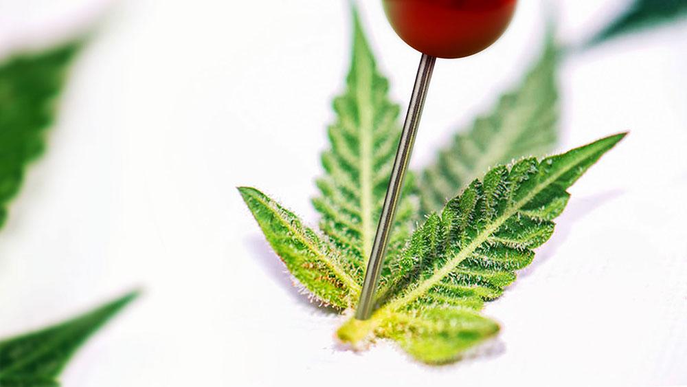 Cannabis leaf pain