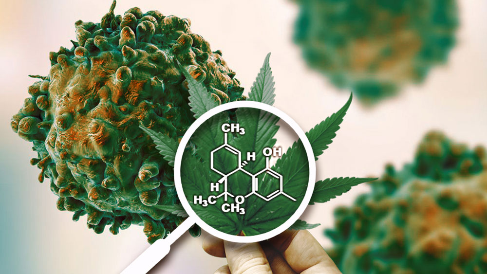 Truths and Misconceptions: Does Marijuana Actually Cure Cancer?