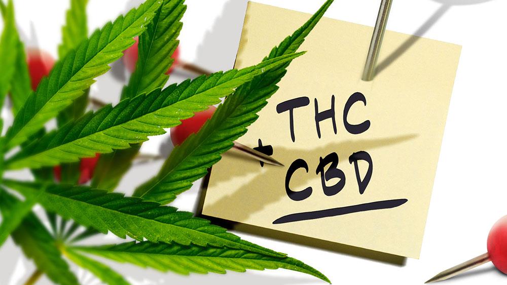 THC vs CBD for pain
