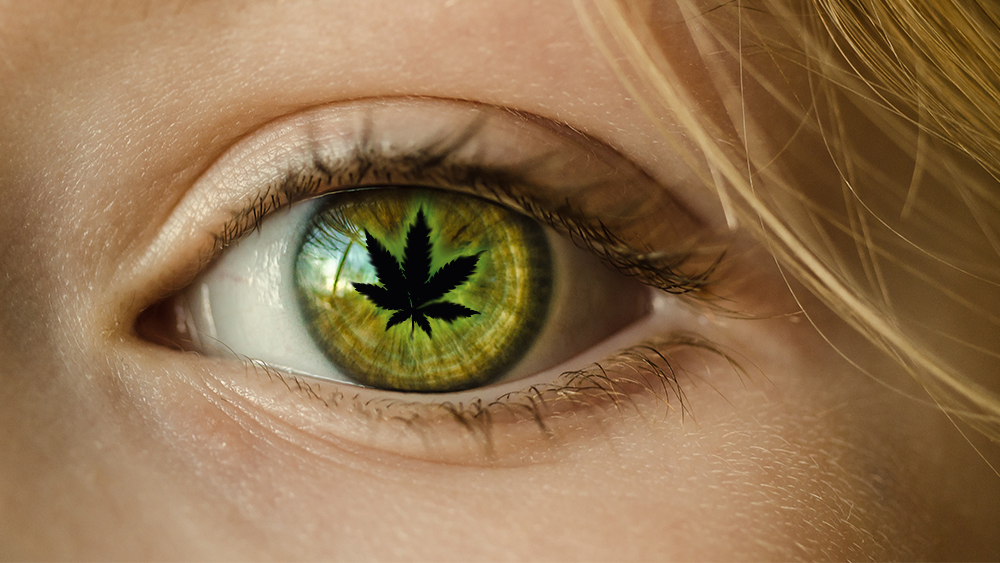 Marijuana and Glaucoma: Best Strains and Latest Research