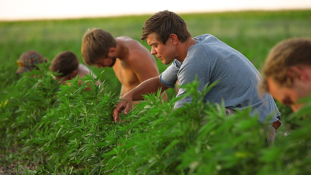organic weed farming