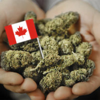 Canadian recreational marijuana market might be smaller than expected