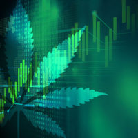 Aurora Cannabis stock keeps growing after a slight dip