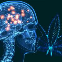 10 Best Marijuana Strains for Parkinson's Disease