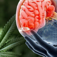 Smoking Weed With a Concussion — Safety Concerns and Best Strains