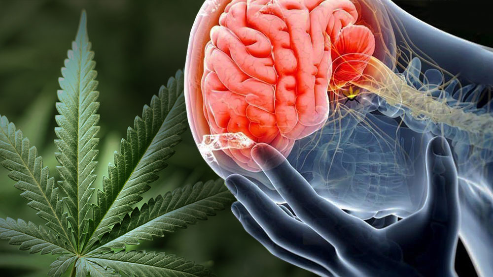 Smoking marijuana with a concussion