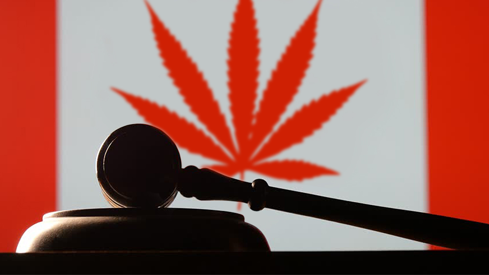 What will the delay in cannabis legalization mean for the LP's in Canada?
