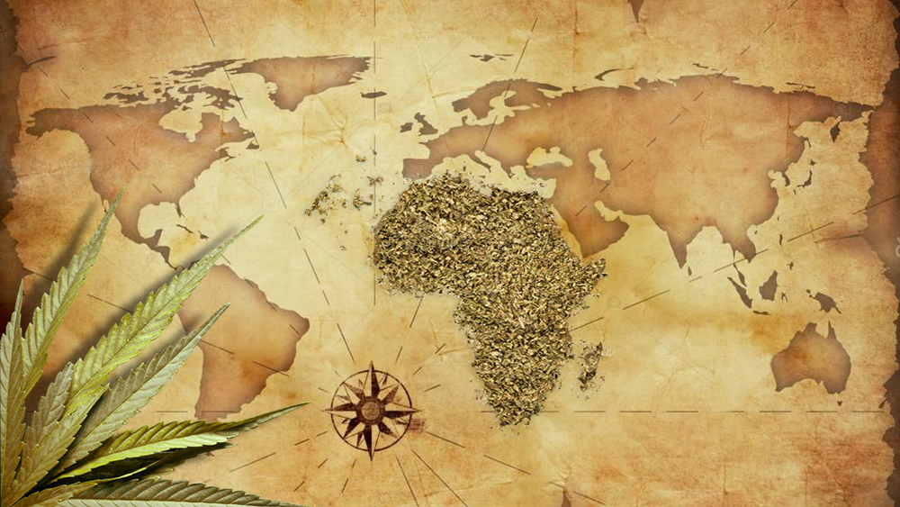 Lesotho and swaziland cannabis