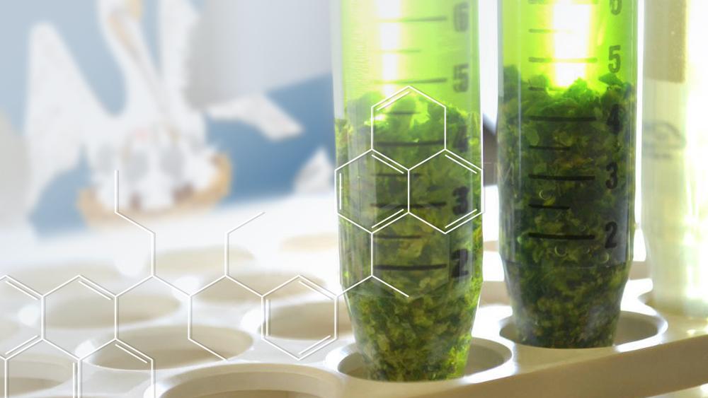 Louisiana medical marijuana