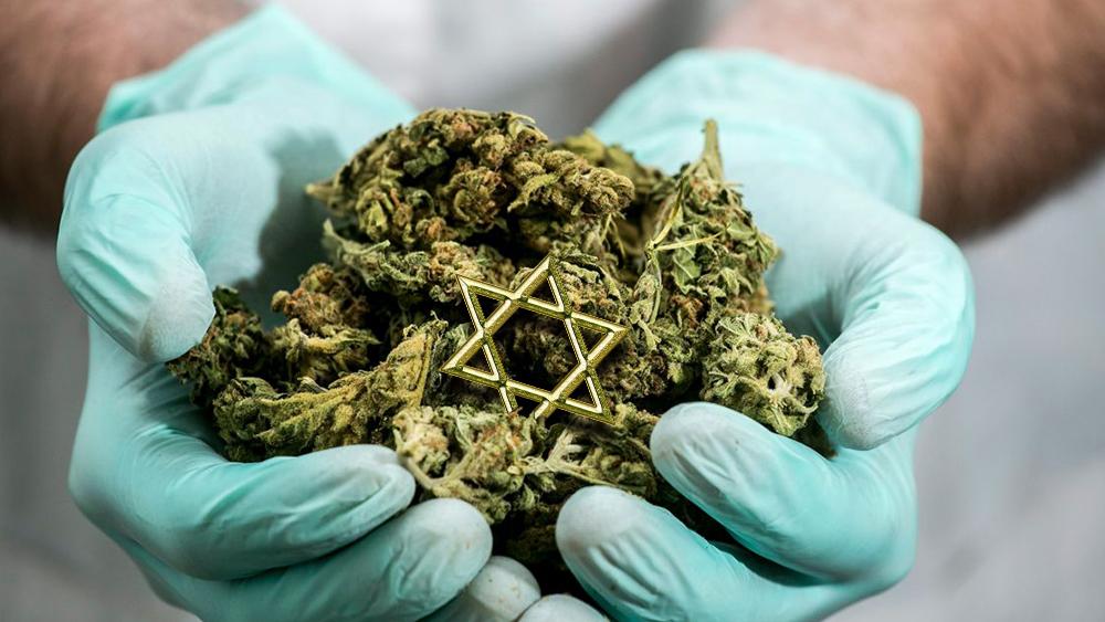 israel cannabis producer