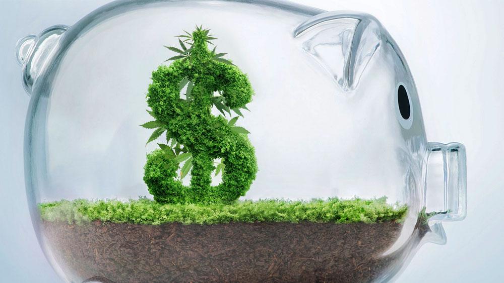 marijuana economy