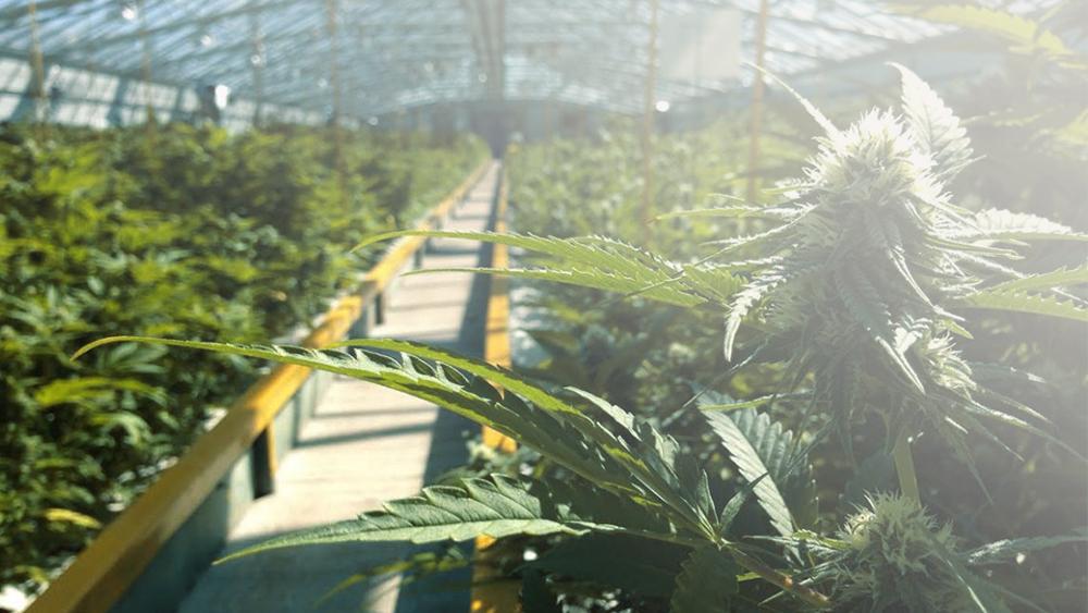 Massachusetts recreational marijuana