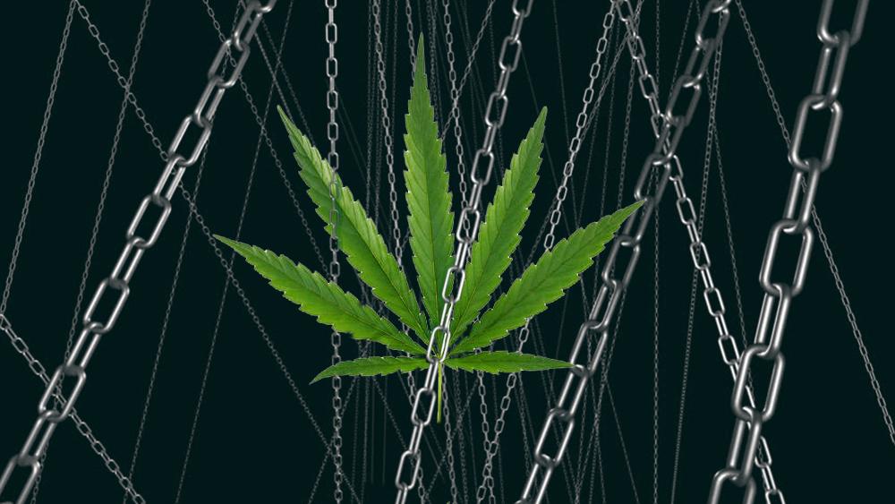 cannabis leaf in chains