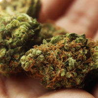 Weed stores in Oregon are firing staff because of weed surplus in the state