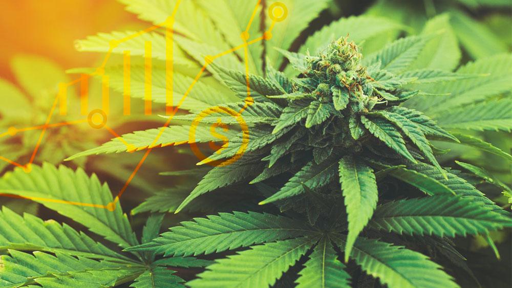 aurora cannabis medreleaf hostile takeover