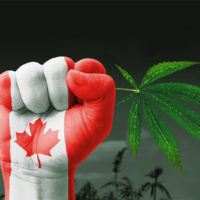 Are oils the solution to the looming cannabis shortage in Canada?