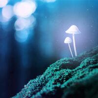 Psilocybin Mushrooms: Benefits, History and Research