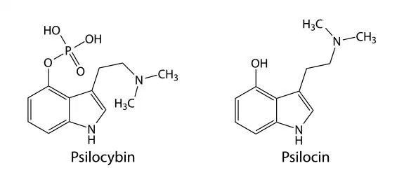 Psilocybin and psilocin formulas