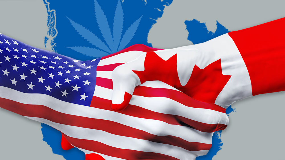 canada america cannabis fund raising