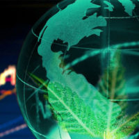 Cannabis needs to be widely available in order to fight the black market