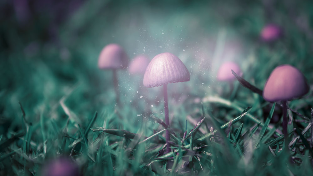 magic mushrooms new research on psilocybin and its benefits