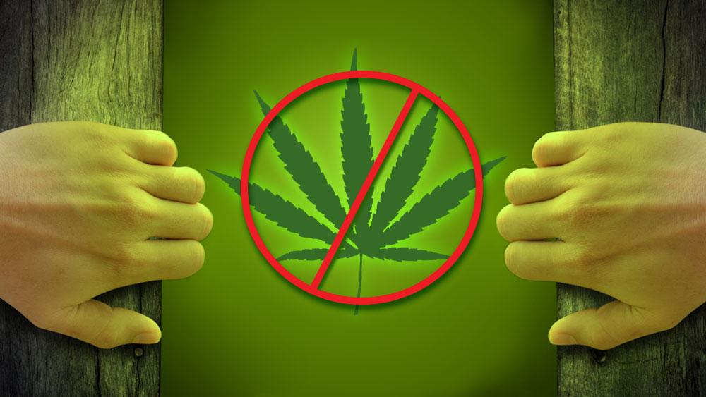 smoke free ontario cannabis