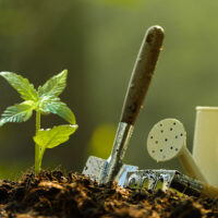 How to Grow Weed Outdoors: 5 Steps (from Seed to Flower)