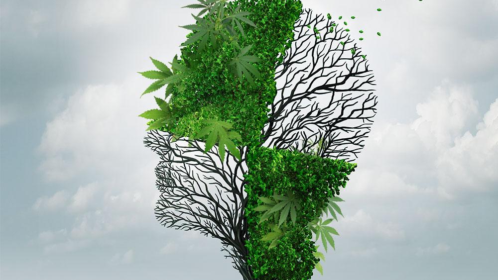 Marijuana and austism