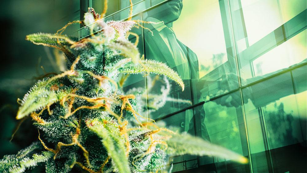 ontario cannabis store supply deal