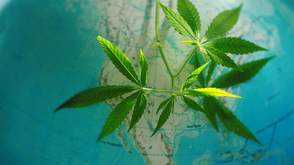 canada global leader cannabis industry