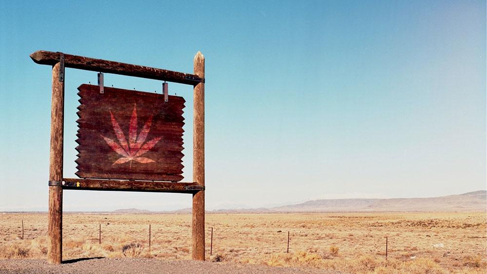 cannabis retail locations