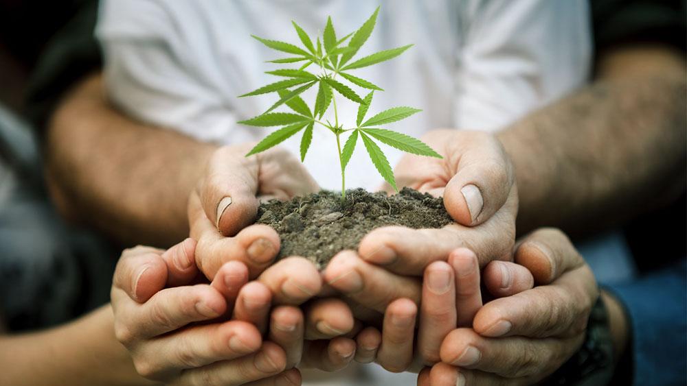 gallup poll cannabis