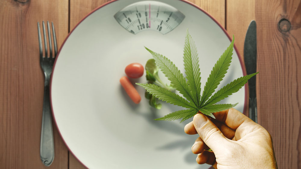Cannabis and eating disorders