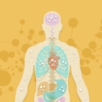 The Endocannabinoid System: A Complete Scientific Introduction