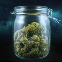 Highest THC Strains: What Are the Strongest Weed Strains of 2020?