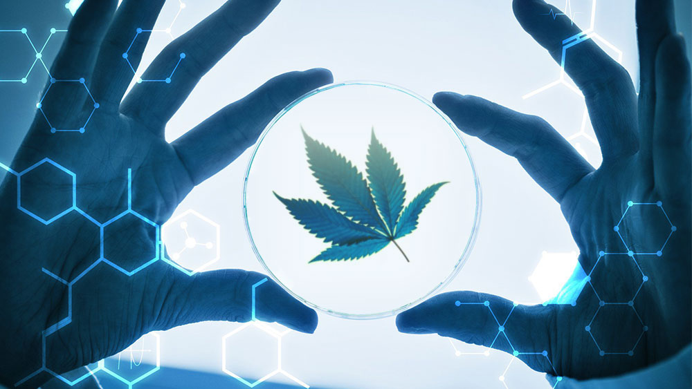 medical cannabis new reported benefits