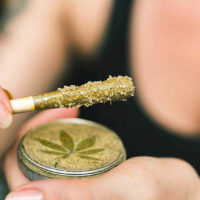 What is Kief? Exploring the Caviar of Weed in 26 Questions