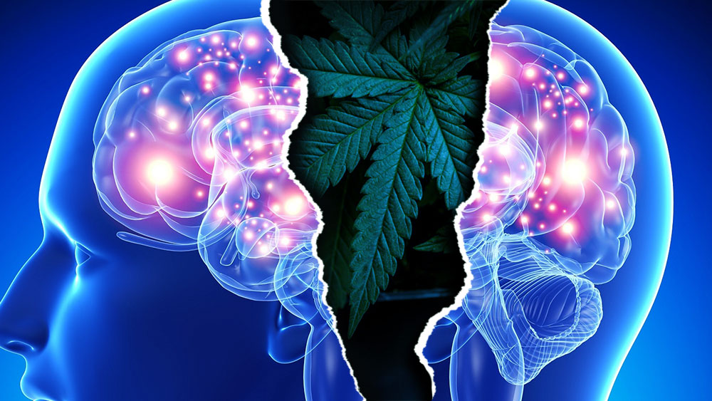 Marijuana and schisophrenia
