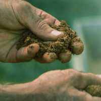 Living soil and organic cannabis are the future of growing in Canada