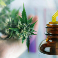 CBD Oil 101 — The Ultimate Beginner's Guide